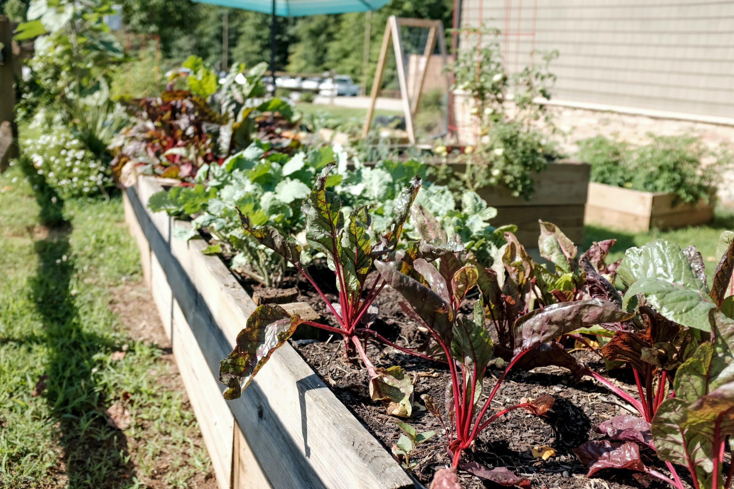 Home built vegetable patch in garden